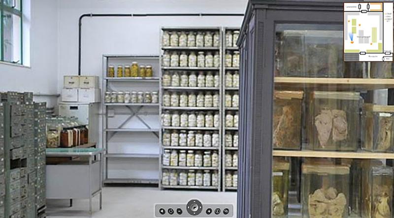 Visita Virtual  a Coleção